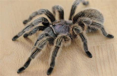 superstition et araign 233 e signification
