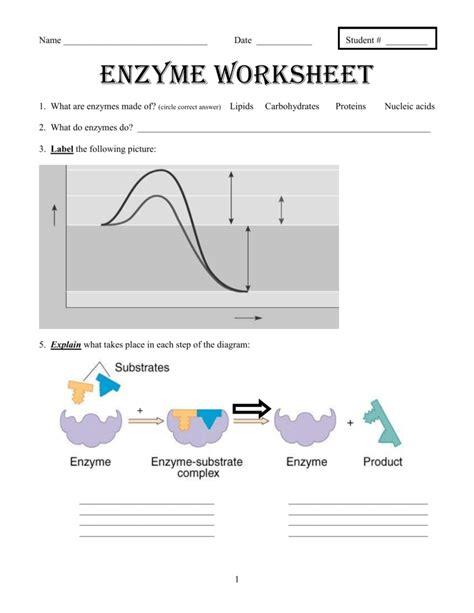 enzyme worksheet worksheets reviewrevitol free printable