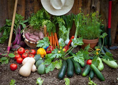 tips for planting a vegetable garden garden ideas how to grow pumpkins gardens and pumpkin