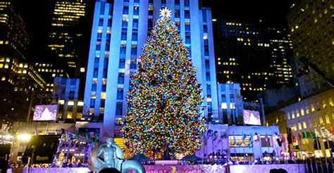 nyc tree location independence at new york and