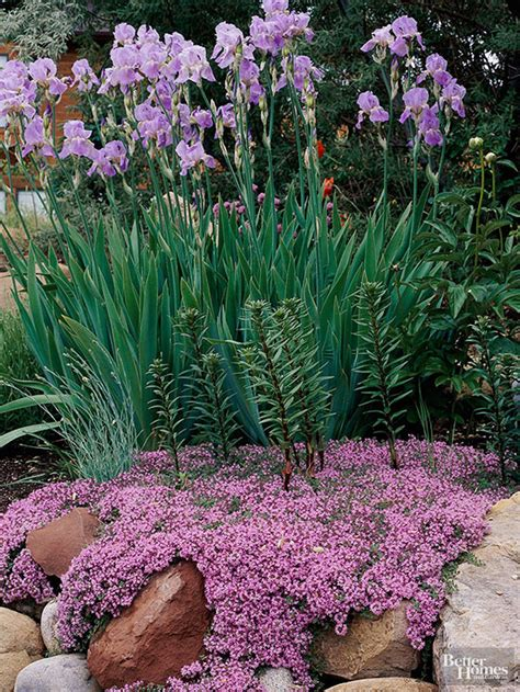 what is rock garden best plants for rock gardens