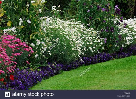 garden border plants flowers perennial border plants and flowers images