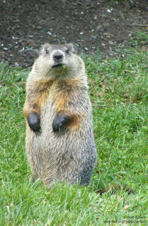 groundhog day song best 25 happy groundhog day ideas on
