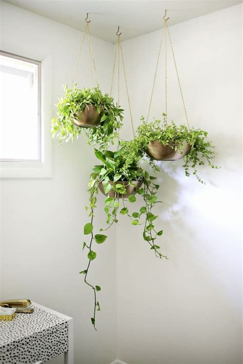 low light hanging plants 25 best ideas about indoor hanging plants on