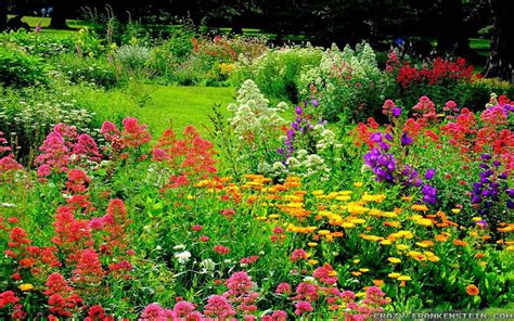 images of beautiful flower gardens the wonderful world of flower gardens the lone in a