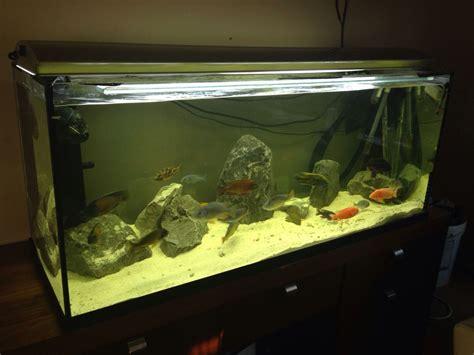 3ft aquarium for sale 3ft fish tank for sale boston