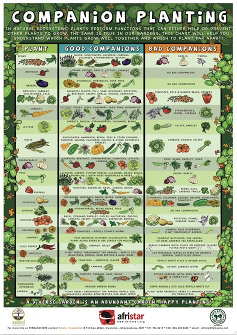 companion flowers for vegetable garden savvy housekeeping 187 companion planting