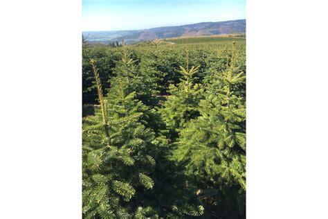weihnachtsbaum kaufen hamburg weihnachtsb 228 ume hersteller news