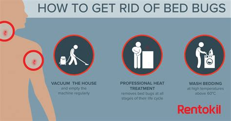 Get Rid Of Bed Bugs Fast by Bed Bug Bites What You Need To