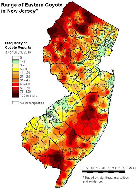 in new jersey njdep division of fish wildlife coyotes in new jersey