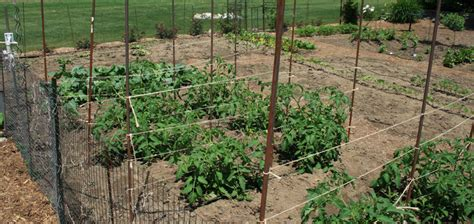 crop rotation home vegetable garden practical crop rotation a second look my everchanging