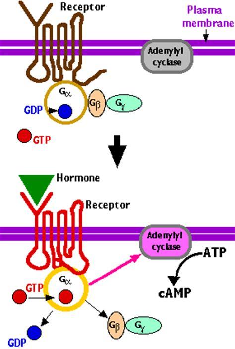 protein g g proteins