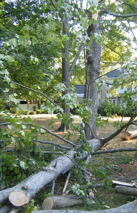 trees nashville commercial and residential tree service serving nashville