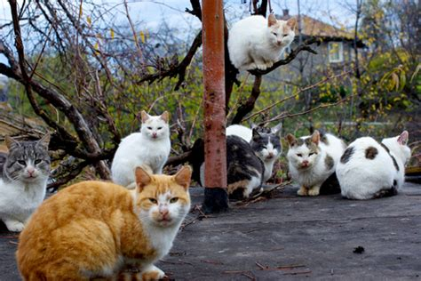 how to keep cats out of vegetable garden how to keep cats out of the vegetable garden veggie gardener