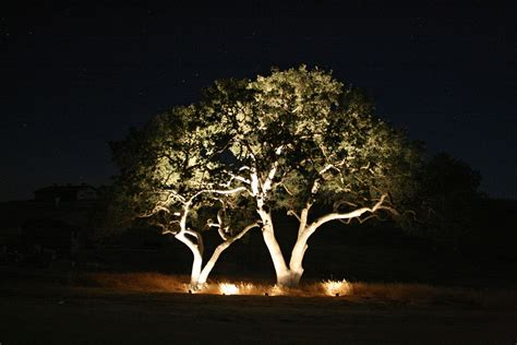 landscape lighting uplight trees outdoor lighting trees home decoration club