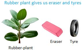 get a rubber st made uses of plants plants as food plants as medicines