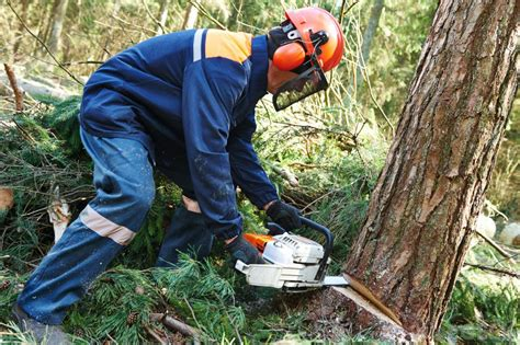 cutting tree what is tree felling with pictures