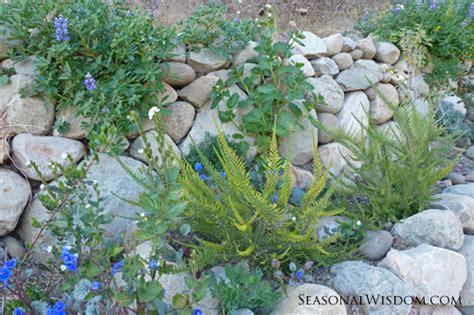 Spring Garden Ventura by A Stroll Through Ventura Botanical Gardens
