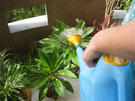 water for plants the citrus water woes