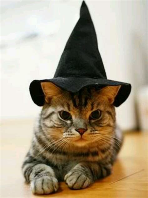 witches cat cat witch