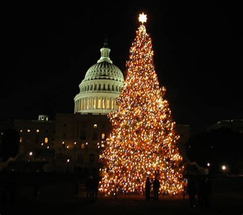 tree up dc the u s capitol tree lit up at free
