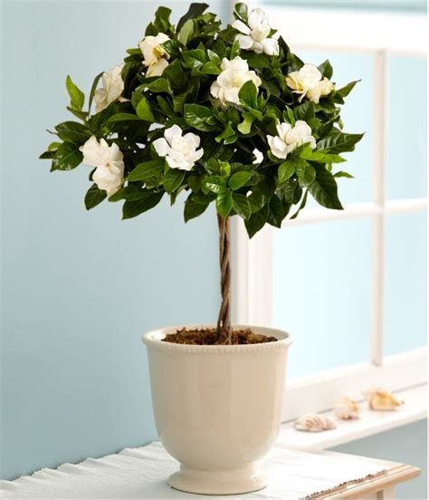 how to pot a tree 25 best ideas about potted trees on trees in