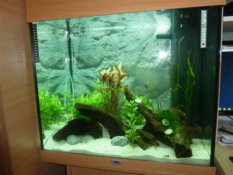 hi i just set up a juwel lido 120 litre tank i set up the tank my aquarium club