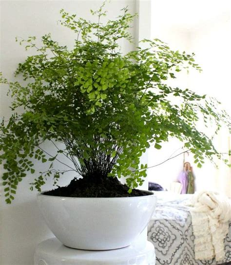 inside house plants 17 best ideas about house plants on plants