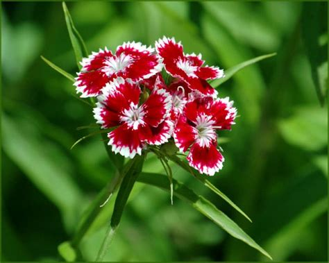 of flowers flowers 4 of 20