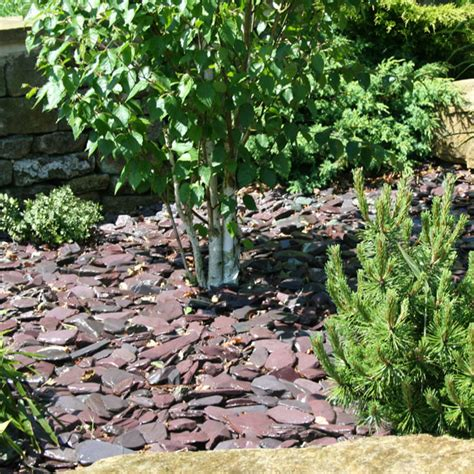slate landscaping plum slate chippings 40mm landscaping specialised