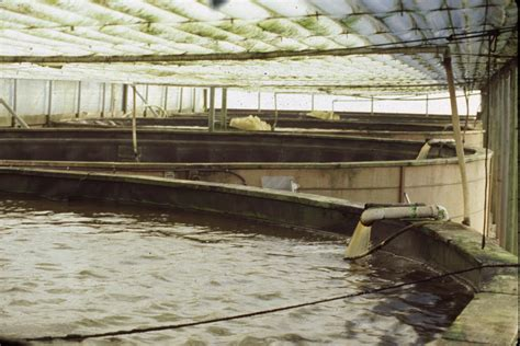 Tilapia Farming Tanks : The Most Efficient Aquaponics Technology Raft System