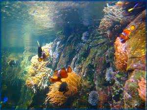 poissons de mer 4 aquarium aquatique animal fond d 233 cran
