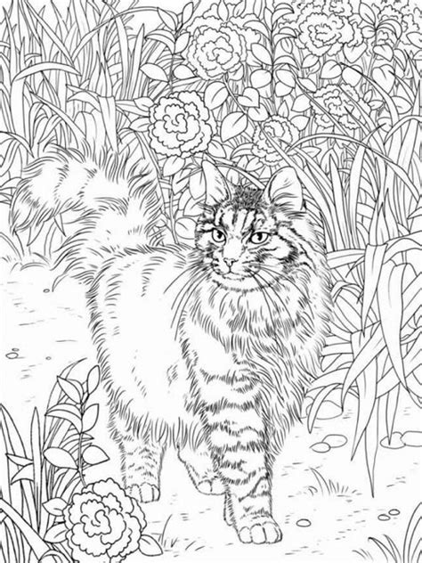 cat for adults best coloring books for cat cleverpedia