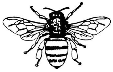 honey bee rubber st 332 best images about coloring pages on oak