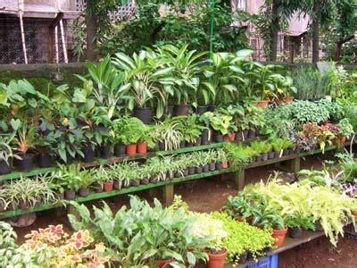 Garden Accessories Mumbai Plants Garden Accessories Wide Variety At Ankur Plant