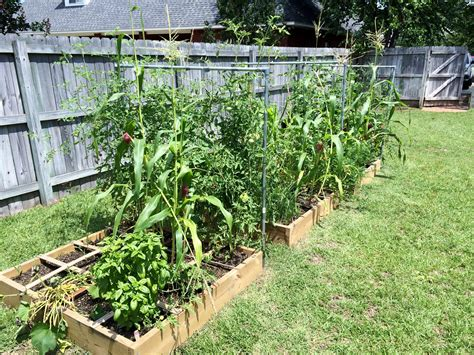 vegetable gardening in south florida get an early start on veggies 187 newsletters
