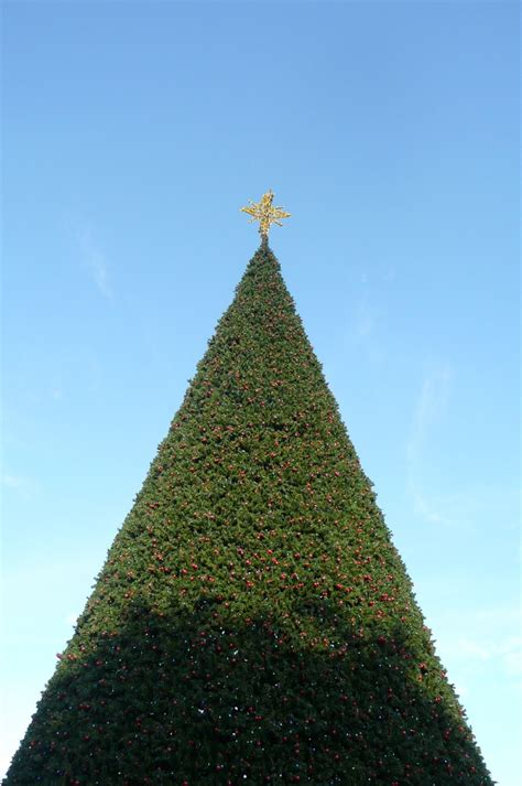 delray tree lighting 23 best images about in delray on