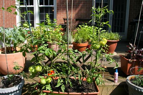 home vegetable garden tips container vegetable gardening ideas this makes his own