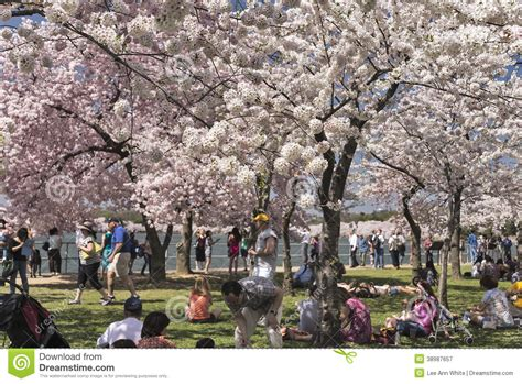 festival wã rthersee the cherry blossom festival in washington dc editorial