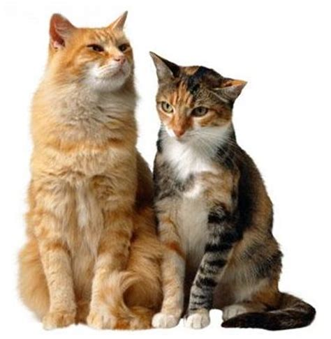 cat for adults how to introduce two cats