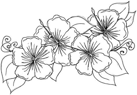 coloring book pictures of flowers free printable hibiscus coloring pages for