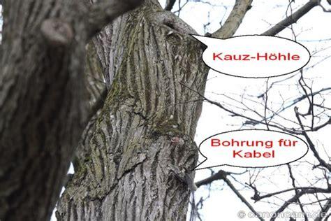 Englischer Garten München Livecam by Waldkauz Kamera In Der Nisth 246 Hle