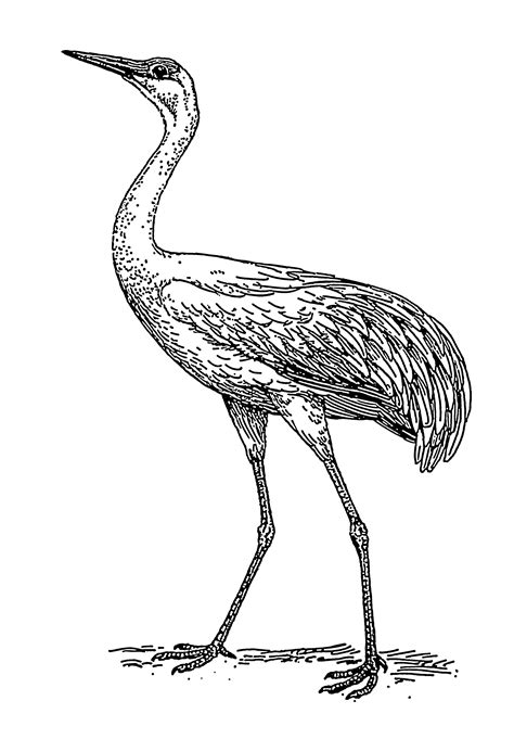 file crane 1 psf png wikimedia commons