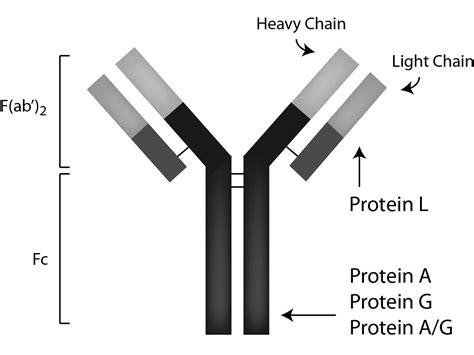 igg sepharose sepharose protein a pa50 00 0002
