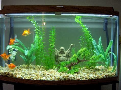 goldfish tank setup ideas www proteckmachinery