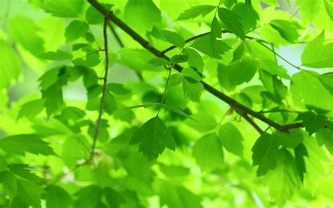 with leaves green leaves wallpaper 2560x1600 30529