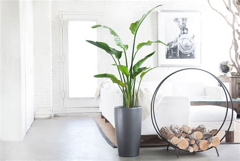 the best indoor plants 10 best indoor plants for gear patrol