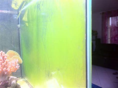 recifal algues verte sur les vitres les algues