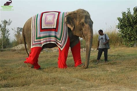Villagers Knit Giant Sweaters For Chilly Elephant Neighbors   Good News Network