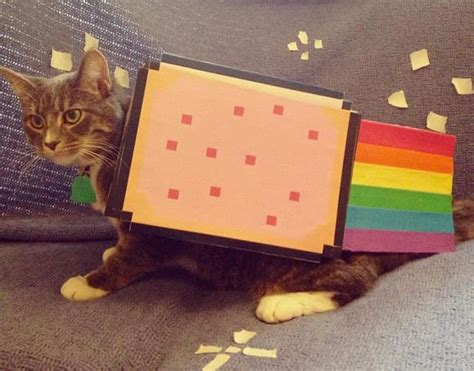 cat ideas nyan cat pet costume bigdiyideas